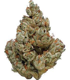 Blueberry Chemdog Weed Strain UK