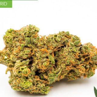 Hybrid Weed Strains Online UK