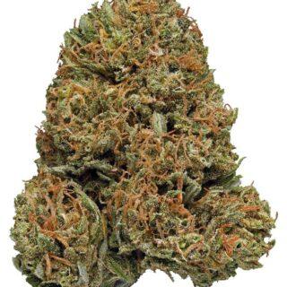 Galactic Jack Marijuana Strain UK