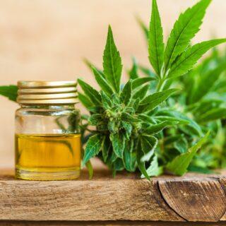 THC cannabis Oil online UK