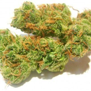 Buy Vortex Marijuana Strain UK