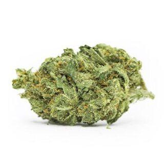 Snow Dog Marijuana Strain UK
