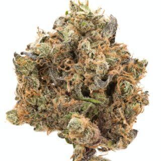 Mr. Nice Guy Marijuana Strain UK