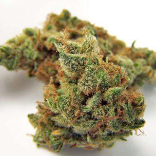 Northern Lights Marijuana Strain UK