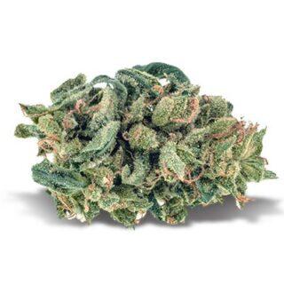 Blue Cheese Weed Strain UK