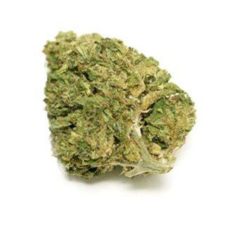 Super Skunk Marijuana Strain UK